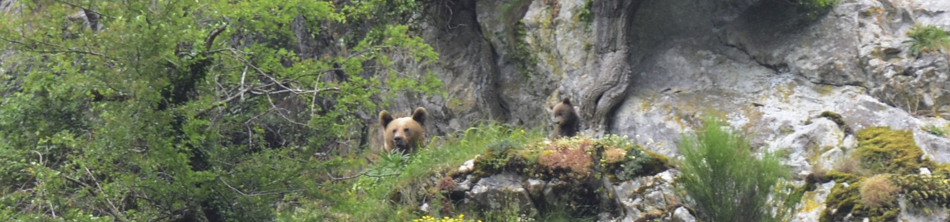 CANTABRIAN BROWN BEAR RESEARCH GROUP
